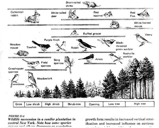 Predation lecture